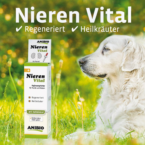 nieren-vital-m